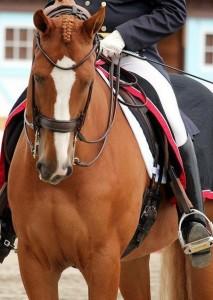 Учебная езда: боковые движения