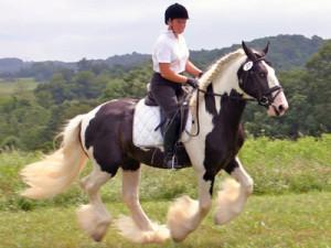 Учебная езда галопом