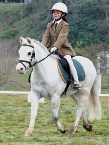 Учебная езда шагом, рысью, остановка и осаживание лошади