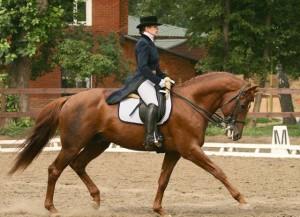Основы посадки всадника на лошади