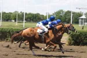 Пробег верховых лошадей