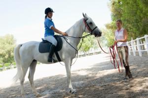 Основы управления лошадью